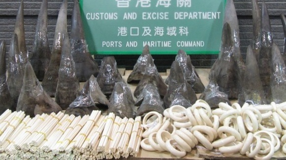 Customs officers in China are seizing increasing amounts of illegal ivory every week.