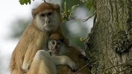 Monkeys killed at Bedfordshire safari park