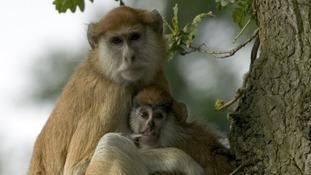 Thirteen monkeys die in fire at Woburn Safari Park in Bedfordshire