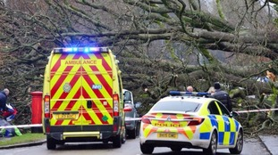 Fallen 300-year-old tree causes car crash