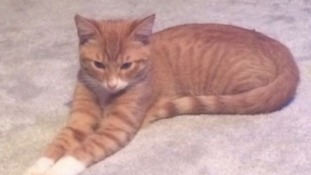 Rusty was one of the cats who fell victim to the suspected pet killer