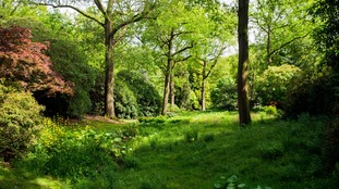 50 million trees to be planted to create a Northern Forest