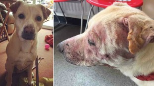Lilly's skin was also red raw from a skin condition and it had little fur left on it.