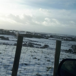 Checking on sheep outside Ballymoney.