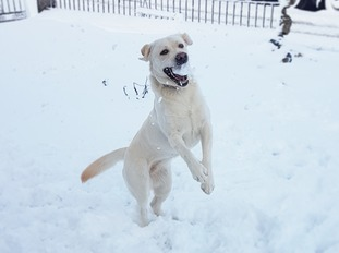 Harper having fun in the snow Clady, Co Armagh.
