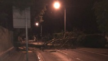 A tree down on Belstead Road in Ipswich.