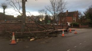 A tree has fallen down in Beeston in Nottinghamshire