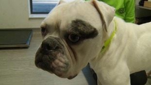 Could you give Kermit the dog a loving home?