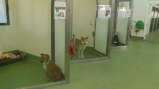 Some of the dogs currently at Birmingham Dogs Home