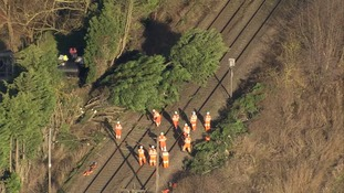 More trees have come down on power lines