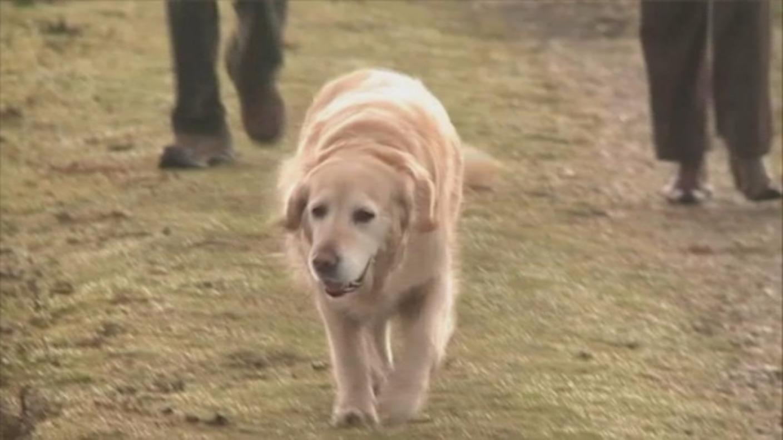 Dog Walks West Wiltshire