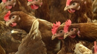 Bird flu warning for the West Country