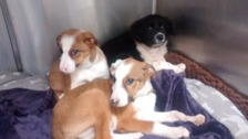 Four helpless pups abandoned in Brighton