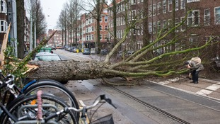 In this street in the Netherlands, a tree crushed a man's parked scooter.