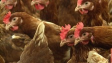 Bird flu warning after outbreak in Dorset