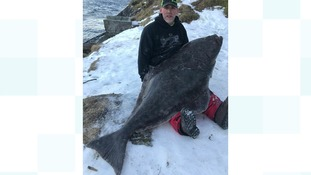Kent angler lands massive halibut weighing as much as him