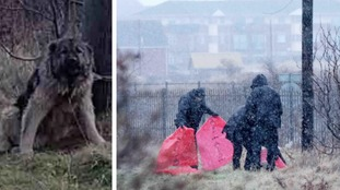Abandoned dog found tied to post is shot dead in Hartlepool
