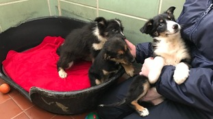 Puppies found in ditch