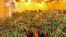 'Ticking time bomb' cannabis factory found in terraced house