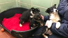 Puppies left for dead after being abandoned in a ditch