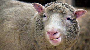 Dolly the Sheep was cloned back in 1997.
