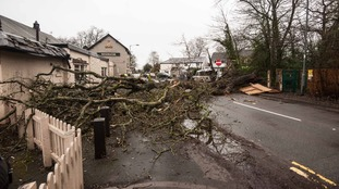 Huge tree falls onto pub, blocking road