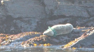 Concerns for seal on IoM with rope around neck