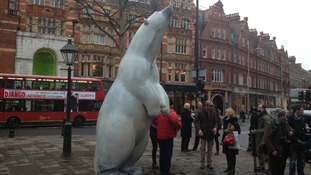'Boris' the polar bear will be on show for the next 28 days