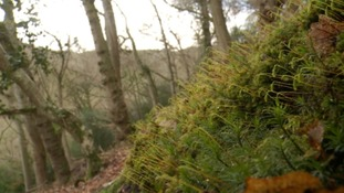 A project to protect ancient woodland in the south west has begun.