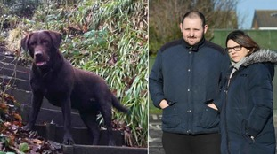 Labrador 'didn't stand a chance' after vicious dog attack in Redcar