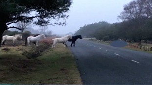 Owner begs drivers to slow down after pony killed