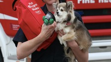 A fire officer demonstrates a pet sized oxygen mask on a dog