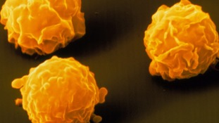 Stem cells within bone marrow can help produce certain blood cells and platelets