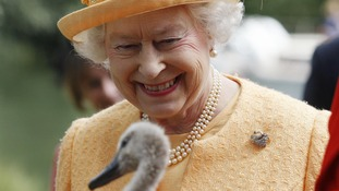 Queen's Windsor swans killed after suspected bird flu outbreak