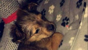 11 week old Sparky who was killed