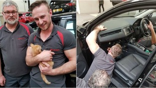 Kitten rescued by mechanics after getting stuck in car dashboard