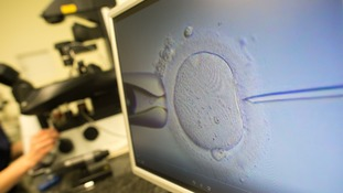 Human eggs grown in laboratory for first time, offering hope for new fertility treatment
