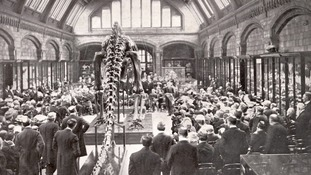 Dippy was the world's first diplodocus skeleton to go on display when he was sent here from America in 1905.