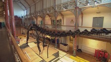 Dippy on tour! First stop: Dorchester