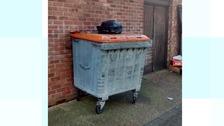 Newborn puppies dumped on bin in Basildon