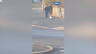 Dog owner filmed hitting and dragging puppy in street - do you know who he is?