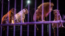 Plans to ban wild animals in circuses in Wales