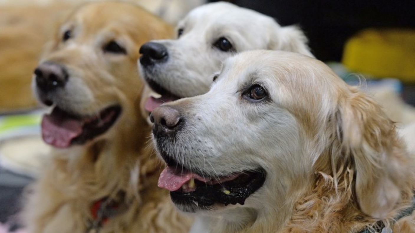 Jersey 'Crufts' 2018 | Channel - ITV News