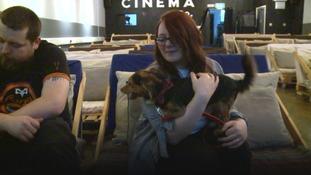 Dog cinema