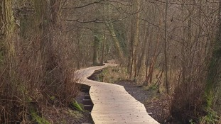 A new boardwalk at Flitwick Moor