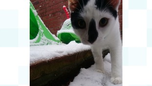 Ashi, from Carlisle, playing in snow for the first time