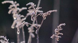 Frost in Bamfurlong KAREN WATTS