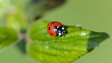 Guernsey bug trail launches