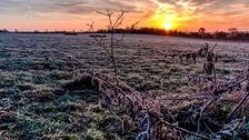 A frosty sunshine