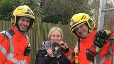 Cat and owner both rescued after getting stuck up tree